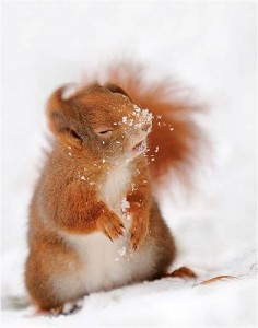 cold-squirrel